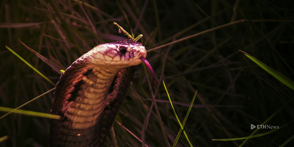 A Snake In The Grass? The Controversy Over Cøbra And Bitcoin.org