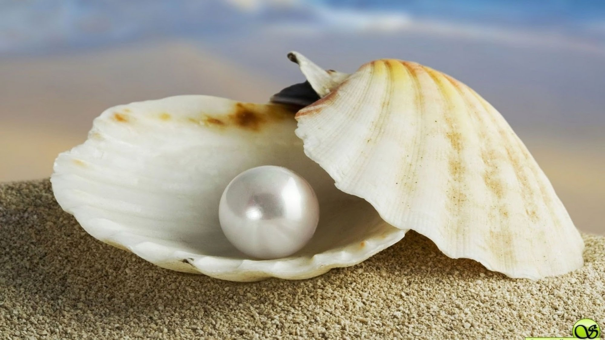 Oyster Pearl Project Forks Into Opacity After Issues with its Funds  