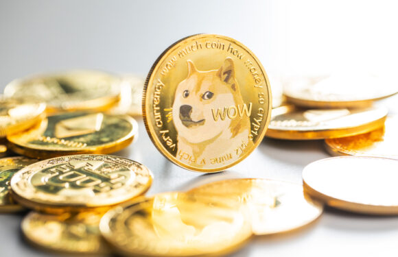 Meme Coins See a Drastic Drop in Performance